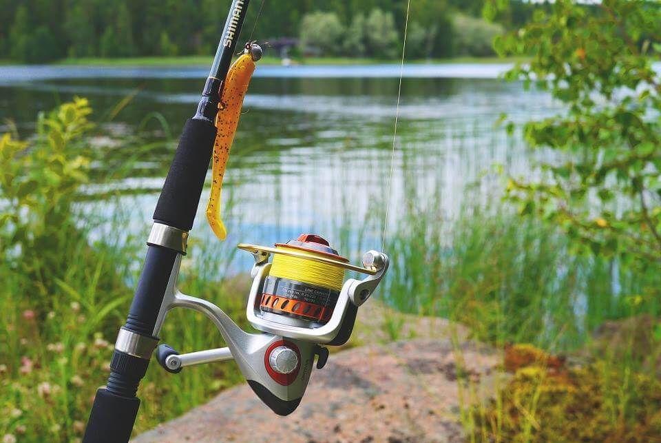 No-kill vissen